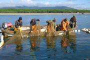 Распределение анадромных видов рыб прошло в Приморском крае